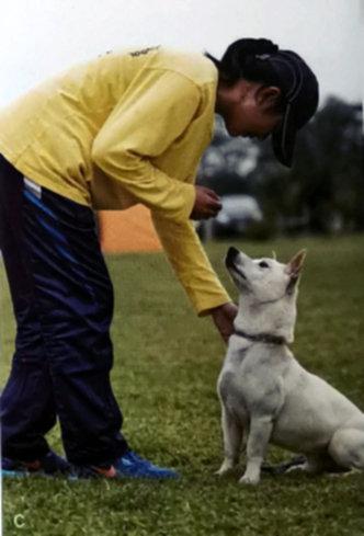 狗狗坐下训练2.jpg