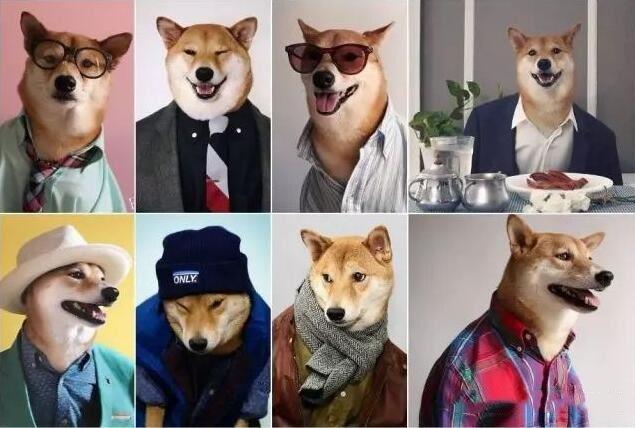 男装犬模.jpg