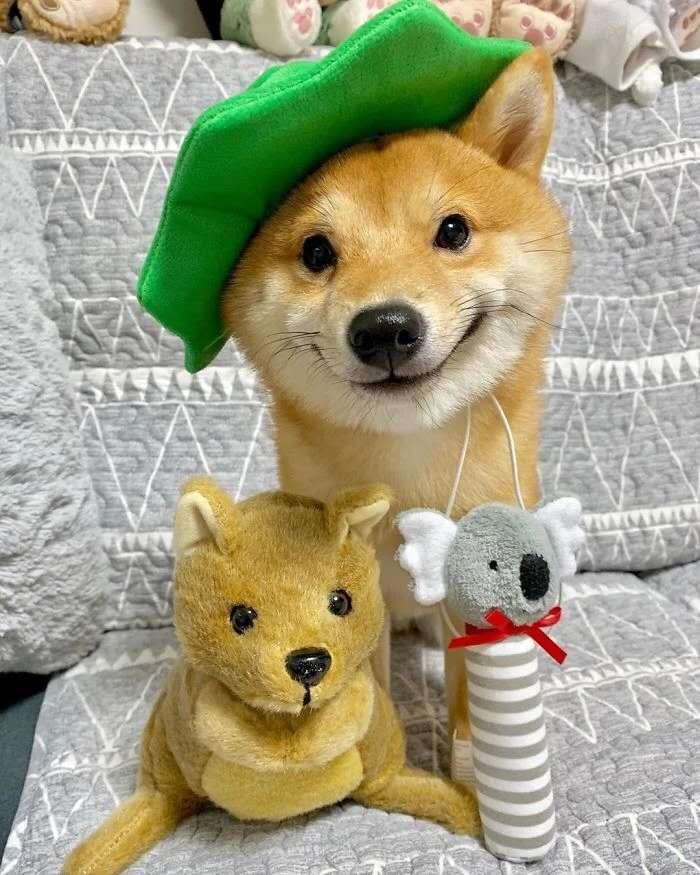 戴帽子的微笑柴犬.jpg