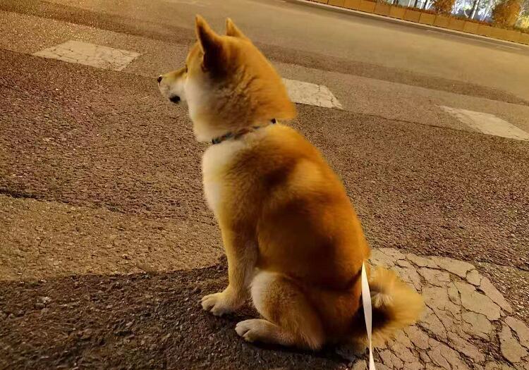 马路上遛狗.jpg