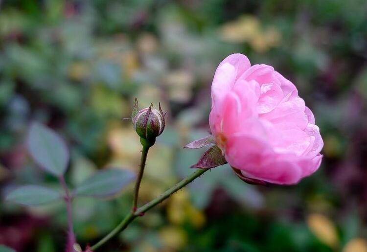 粉色的小花.jpg