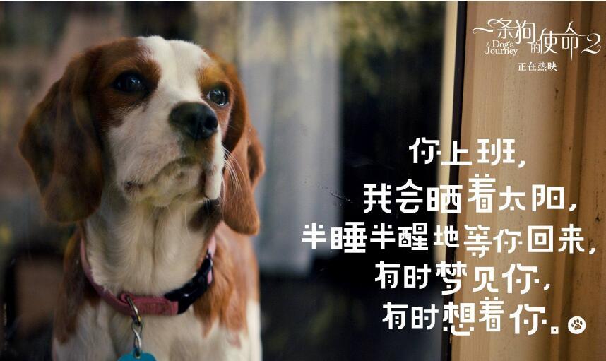 一条狗的使命2剧照.jpg