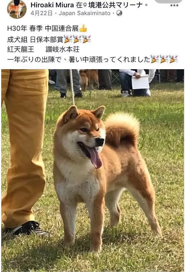 柴犬中国联合展成全组红天龙王.jpg