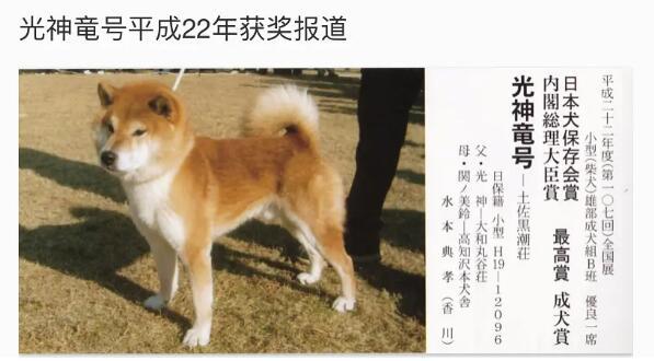 柴犬神童号平成22年获奖报道.jpg