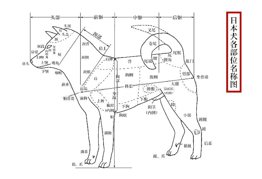 日本犬各部位名称图.png