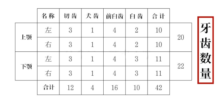 日本犬牙齿数量标准.png