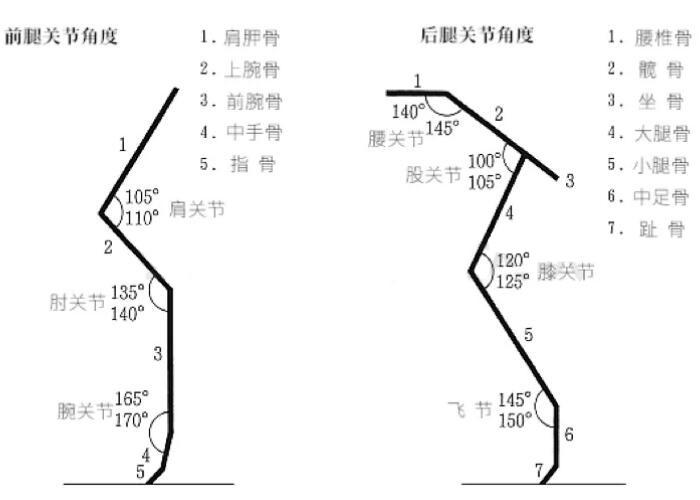 柴犬肘部及四肢的关节角度图2.jpg